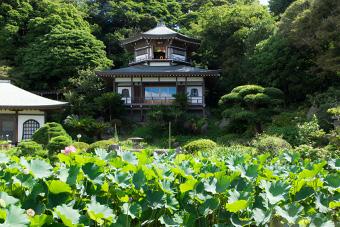 鎌倉 光明寺の観蓮会